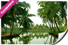 """Serene green fields with beautiful coconut trees and flowing streams is the nature at its best """"Konaseema"""""""