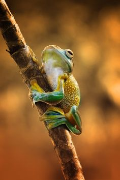 """by Muhammad Ridha"" Adorable frog"
