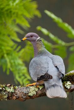 Natureza tinta com pincel no show de aves e pássaros multicoloridos