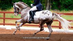 Le cheval est le meilleur juge d'un bon cavalier.
