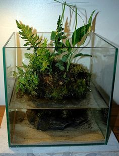 Wabi Kusa - this is a new-to-me twist on the garden-variety terrarium