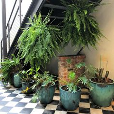 planting under stairs House Plants Decor, Plant Decor, Garden Planters, Indoor Garden, Potted Plants, Indoor Plants, Indoor Trees, Plants Are Friends, Diy Porch