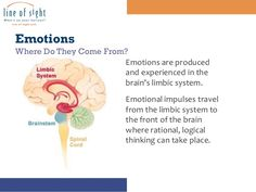 People with high emotional intelligence are usually successful in most things they do. High Emotional Intelligence, Limbic System, Brain, Learning, Emotional Intelligence, The Brain, Teaching, Studying