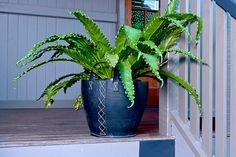 Recycled Car Tyre Planters