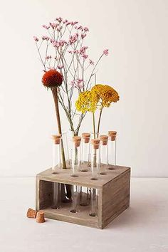 Test Tube Vase front desk to hold product ingredients like sunflower