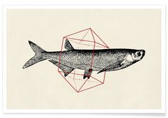 Fish in Geometrics II als Premium Poster von Florent Bodart | JUNIQE