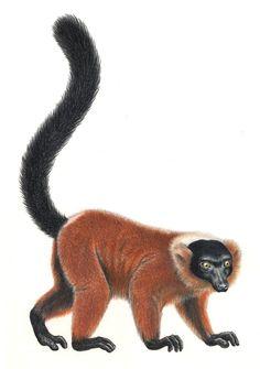 Top 25 Endangered Primates