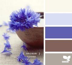 Cornflower blue & brown