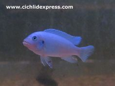 CobaltBlue3