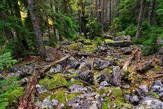 Мountain forest. Svaneti. Georgia by Alexander Deshkovets on 500px