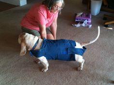 Dog Diaper Suit Instructions