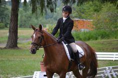 Chestnut pony doing dressage