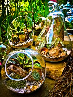 Shop from our online store!   http://www.ebay.com/usr/desi_bloo  Terrariums, air plants, supplies, and more!