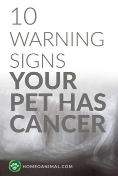 It was just a normal yearly check-up at the vet's, or so you thought. This visit is one you'll never forget. Your dog is wagging his tail unaware of what the ve...