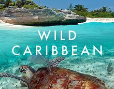 "Check out new work on my @Behance portfolio: ""WILD CARIBBEAN flyer"" http://be.net/gallery/37475335/WILD-CARIBBEAN-flyer"