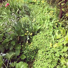 茂りすぎで奥に行けない庭 - @sakkn- #webstagram