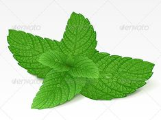 VECTOR DOWNLOAD (.ai, .psd) :: https://jquery.re/article-itmid-1002678213i.html ... Mint leaf ... dew, drop, eating, freshness, green, healthy, herb, ingredient, leaf, mint, object, peppermint, plant, single, spearmint, twig, vector, wet ... Vectors Graphics Design Illustration Isolated Vector Templates Textures Stock Business Realistic eCommerce Wordpress Infographics Element Print Webdesign ... DOWNLOAD :: https://jquery.re/article-itmid-1002678213i.html