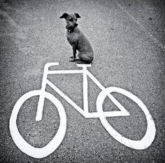 velo & dog