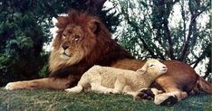 Pastor pointed out a very powerful truth: our Lord Jesus is not only the Lamb Who takes away the sin of the world, but He is also the Lion, the mighty Lion of Judah.... not always meek and gentle; but also full of power and might. An awesome thought!