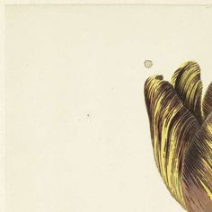 tulp-Collected Works of Marlene - All Rijksstudio's - Rijksstudio - Rijksmuseum