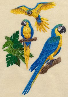 sunbonnet sue tropical | Blue-and-yellow Macaw Collage