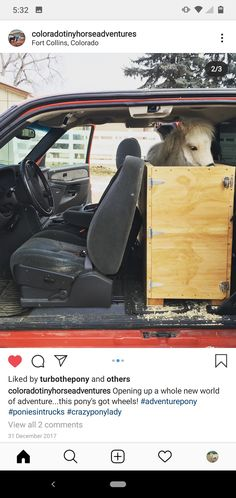 Follow @Coloradotinyhorseadventures on Instagram. Miniature pony in a diy truck stall.   (None of the photos are mine and I do not claim to own them.) They are just minature horse therapy inspiration. Miniature Ponies, Horse Therapy, Dwarf, Pony, Truck, Miniatures, Around The Worlds, Horses, Photos