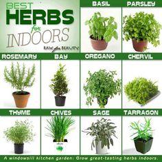 Fines herbes poussant bien à l'intérieur