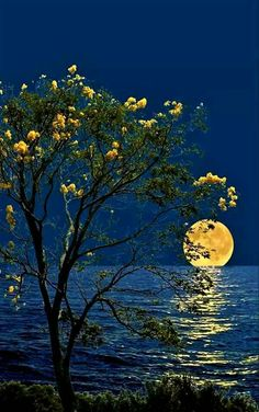 I like the flowers on the bush/tree being the same color as the moon on the horizon. I like the ripples in the water are detailed and match the curve of the shore. Beautiful Moon, Beautiful World, Beautiful Places, Beautiful Pictures, Moon Pictures, Nature Pictures, Ciel Nocturne, Image Nature, Shoot The Moon