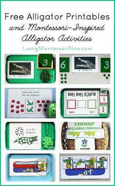 A is for Alligator.a long list of FREE Alligator Printables and Montessori-Inspired Alligator Activities Waldorf Montessori, Montessori Homeschool, Montessori Classroom, Montessori Activities, Preschool Classroom, Preschool Learning, Homeschool Curriculum, Preschool Activities, Teaching Kids