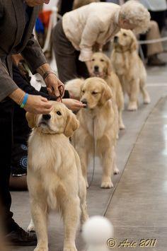 Getting ready to show... #houstondogshow #reliantdogshow #2011