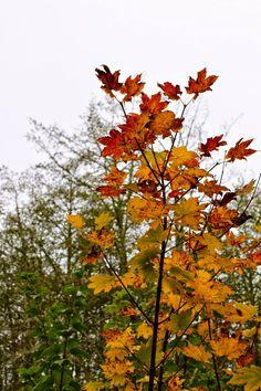 joshua tree memorial day weekend