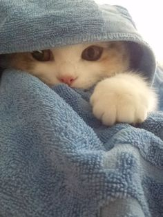 Kitten in a towel