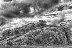 """King of the rock"" in Serengeti, Tanzania ©Charlie Lynam"