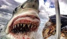 Great White Shark Close-Up Photo Goes Viral