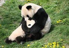abrazo de oso ♥