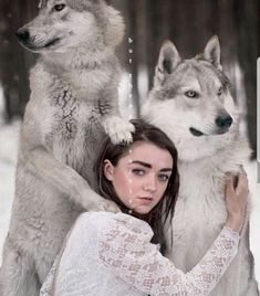 Maisie Williams Arya whit her wolf I like this picture very much you are very beautiful girl This are real flwolfs I Love… Dessin Game Of Thrones, Arte Game Of Thrones, Game Of Thrones Arya, Game Of Thrones Quotes, Game Of Thrones Funny, Game Of Throne Poster, Game Of Throne Actors, Maisie Williams, Acteurs Game Of Throne