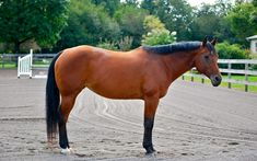 Noble Life: How to Pull a Horse's Mane.  Here is the step by step process to get you started!