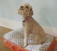 Whelp, I've jumped on the vintage suitcase dog bed bandwagon. What, you ask, are vintage suitcase dog beds? Well these adorable pet beds are basically just upcycled old suitcases. Animal Projects, Diy Projects, Diy Vintage, Vintage Dog, Dog Milk, Designer Dog Beds, Diy Shows, Diy Dog Bed, Diy Bed