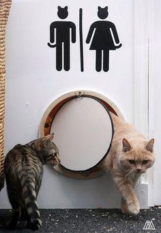 Kattenluik naar het toilet.