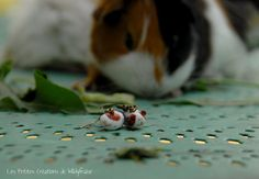 Guinea pigs earrings. Handmade.