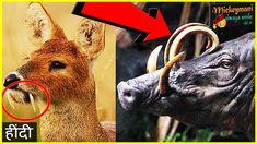 दुनिया मे 6 सबसे कम पाए जाने वाले जानवर - TOP 6 RARE ANIMALS YOU DON'T N...