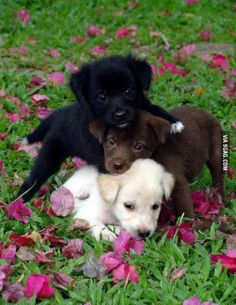 A stack of cuteness in different colours!