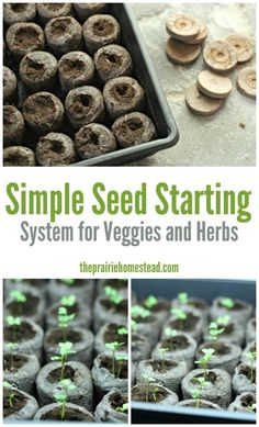 Backyard Garden Design Simple Seed Starting System for Veggies and Herbs.Backyard Garden Design Simple Seed Starting System for Veggies and Herbs Growing Tomatoes In Containers, Growing Vegetables, Grow Tomatoes, Organic Gardening, Gardening Tips, Vegetable Gardening, Arizona Gardening, Florida Gardening, Veggie Gardens