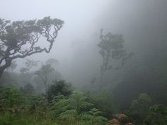 Horton Plains-Sri Lanka