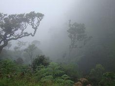 Horton Plains-Sri Lanka