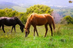 Caring For The Companion Horse