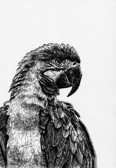 Black Pen Sketches, Black Pen Drawing, Biro Drawing, Parrot Drawing, Abstract Pencil Drawings, Ink Pen Drawings, Animal Drawings, Illustration Pen And Ink, Ink Illustrations