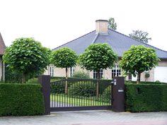 Catalpa bignoides 'Nana' - Another! Boxwood Garden, Topiary Garden, Garden Trees, Front House Landscaping, Backyard Landscaping, Garden Landscape Design, Garden Planning, Garden Inspiration, Beautiful Gardens