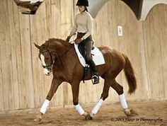 Flashy Starlight mare with three beautiful gaits. Very elastic, open shoulder, powerful mover. Definite FEI Young Horse potential. Sensible for an Amateur or Young Rider. Ready to turn heads in the ring at Training level! $35,000