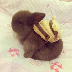 oh my goodness baby bunny with a baby pack pack